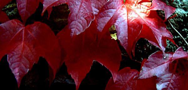 I-colori-dell'autunno.jpg