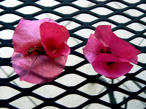 Giocando con fiori caduti