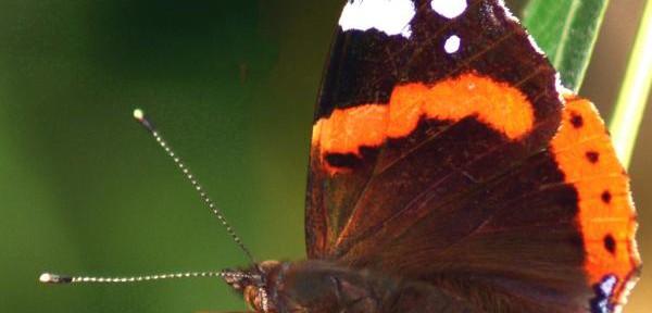 Colori-volanti---farfalla.jpg