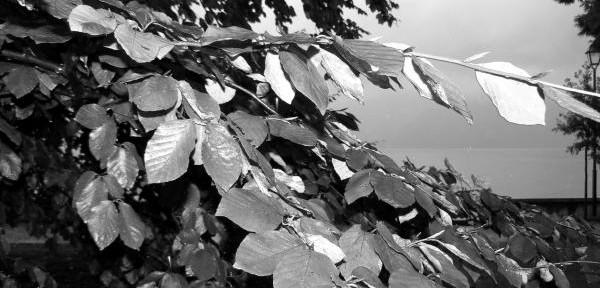 Novembre-in-bianco-e-nero-con-pioggia-e-foglie.jpg