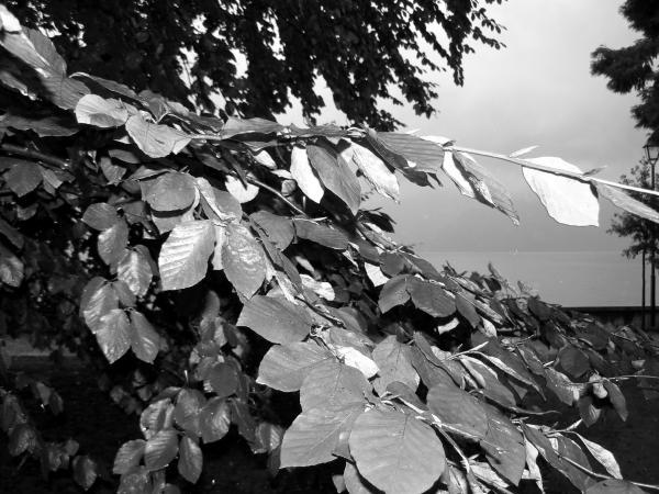 Novembre in bianco e nero con pioggia e foglie