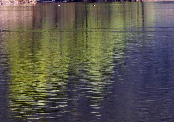 Colori nell'acqua 5